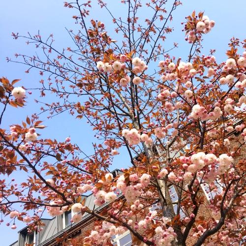 Düsseldorf Standortseite Foto von Blumen auf Kopernikusstraße